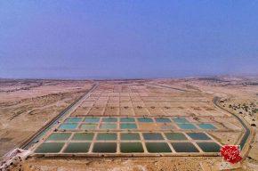ارزآوری در کشور با توسعه صنعت شیلات در روستاهای قشم